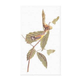 Lienzo Pájaro de la curruca de la magnolia de Audubon del