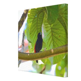 Lienzo Pájaro de Rican de la costa del Tanager de