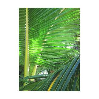 Lienzo Palma de coco hawaiana