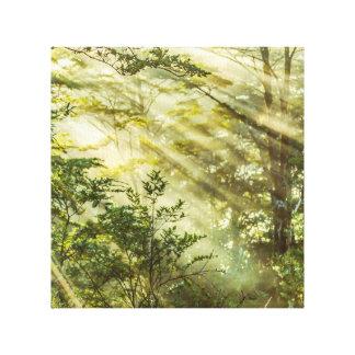 Lienzo Parque de Queulat, paisaje del bosque de la