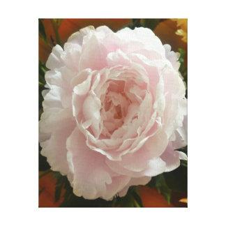 Lienzo peony rosado de la Doble-floración en fondo