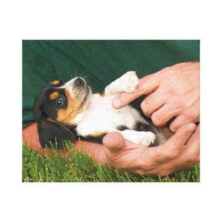 Lienzo Perrito querido del beagle