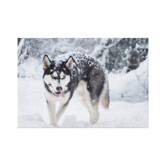 Lienzo Perro esquimal en la nieve