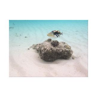 Lienzo Pescados del coral de las aventuras de Maldivas de