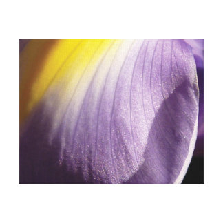 Lienzo Pétalo púrpura y amarillo de la foto hermosa del