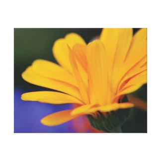 Lienzo Pétalos anaranjados de la flor de la foto hermosa