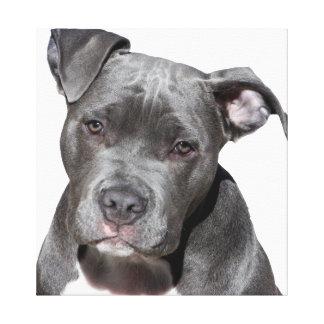Lienzo Pitbull Terrier americano
