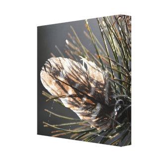 Lienzo Pluma salvaje de Turquía en agujas del pino