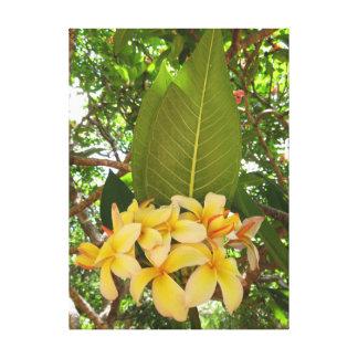 Lienzo Plumeria hawaiano