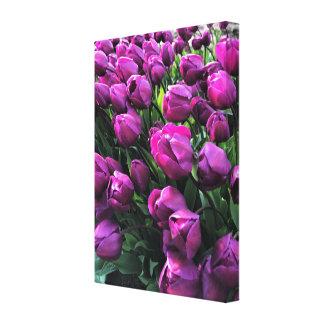 Lienzo Príncipe púrpura Tulips