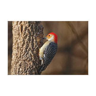 Lienzo pulsación de corriente Rojo-hinchada en un árbol