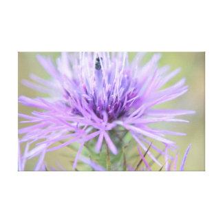 Lienzo Púrpura