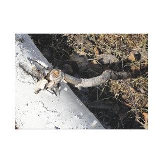 Lienzo Registro del árbol de abedul