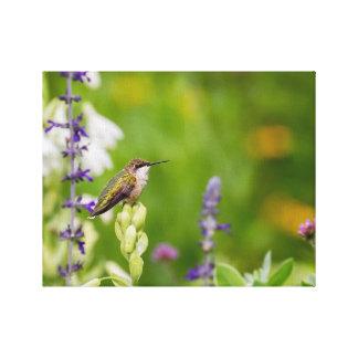 Lienzo Resto del colibrí