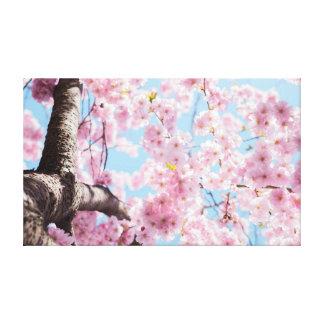 Lienzo Rosa de la flor de cerezo el |