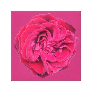 Lienzo Rosa rojo