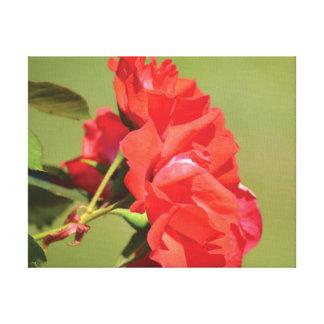 Lienzo Rosa rojo de la foto hermosa del primer en verde