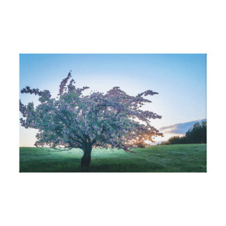 Lienzo Salida del sol de la primavera, árbol florecido en