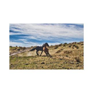 Lienzo Sementales salvajes jovenes del mustango que