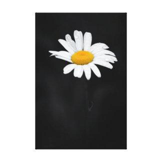 Lienzo Sola flor blanca y amarilla de la margarita en