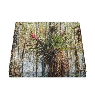 Lienzo Sorpresa en el pantano - un Bromeliad en un árbol