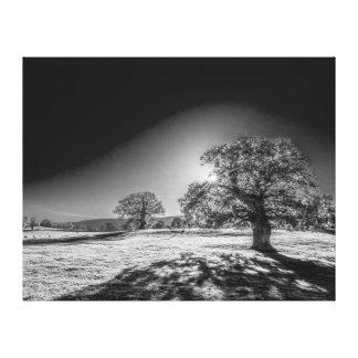 Lienzo Sun sereno en el prado blanco y negro