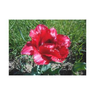 Lienzo Tulipán rojo precioso