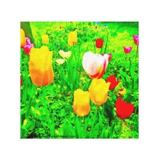 Lienzo Tulipanes del jardín de flores