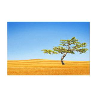 Lienzo Un árbol solitario en campos del oro