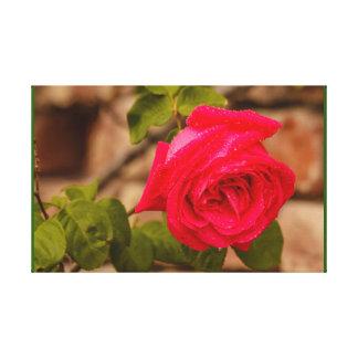 Lienzo Un color de rosa mojado después de la lluvia en