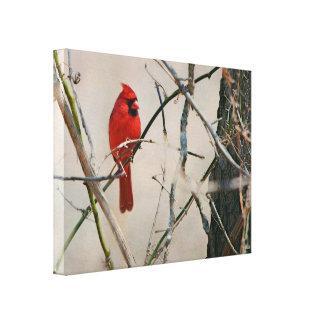 Lienzo Un pájaro cardinal rojo en una rama en las maderas