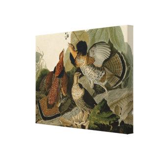 Lienzo Urogallo superado de Juan Audubon