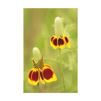 Lienzo Virtudes del columnifera del Ratibida de la flor
