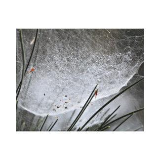 Lienzo Web de araña en los pinos