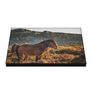 Lienzo Wild Horse