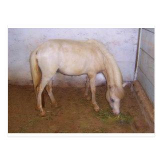 Lil Pony-2 Postal
