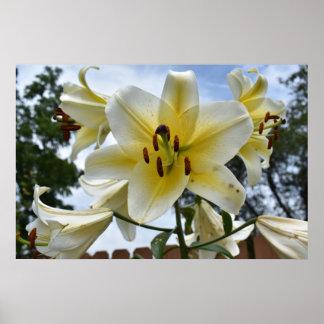 Lillies bonito póster