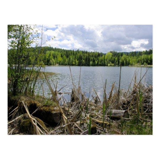 Límite del lago trees y del lago marshall del postal