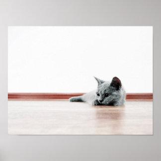 Lindo estupendo del gatito del gato del doblez del póster