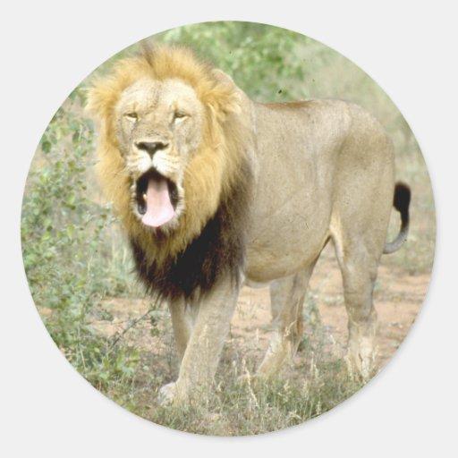 lion1.jpg pegatina redonda