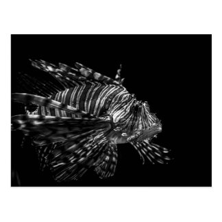 Lionfish - postal