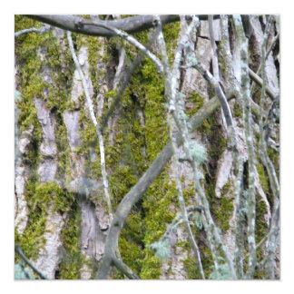 Liquen, corteza, y ramas invitación 13,3 cm x 13,3cm