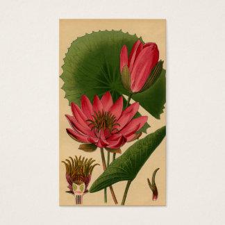 Lirio de agua botánico del rosa de la impresión tarjeta de visita