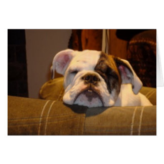 Lirio el perrito inglés del dogo tarjeta