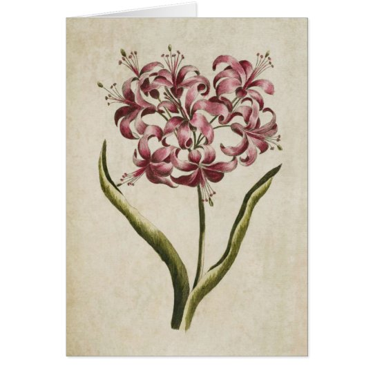 Lirio floral botánico de Guernesey del vintage Tarjeta De Felicitación