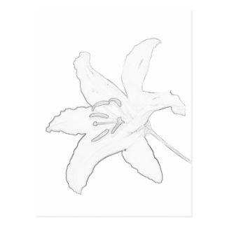 Lirio oriental abstracto blanco postal