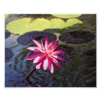 Lirio rosado arte con fotos