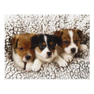 Litera de perritos postal