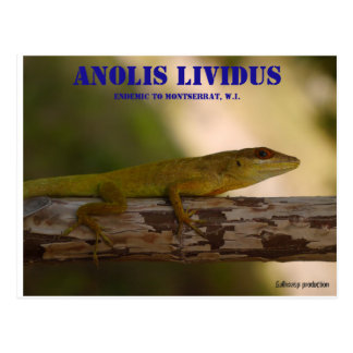 Lividus endémico del Anolis de la especie Postal