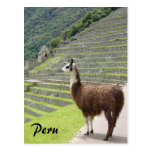 llama de Perú Postal